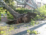 uprooted tree, yonkers ny